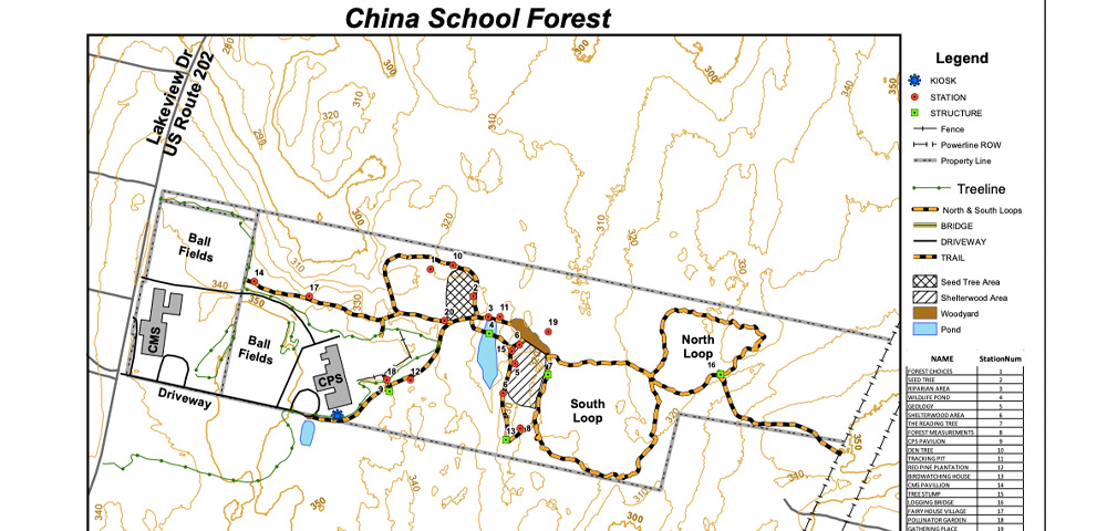 China School Forest Update - China Middle